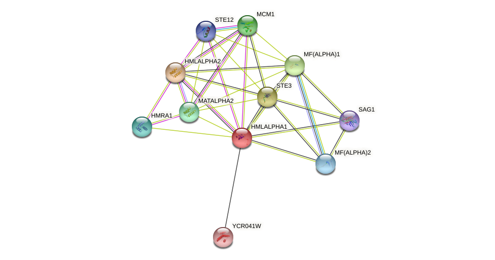 HMLALPHA1 protein (Saccharomyces cerevisiae) - STRING interaction network
