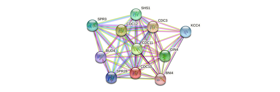 CDC10 protein (Saccharomyces cerevisiae) - STRING interaction network