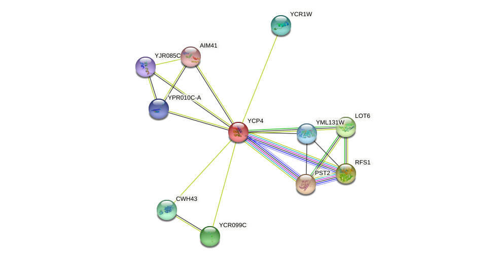 YCP4 protein (Saccharomyces cerevisiae) - STRING interaction network