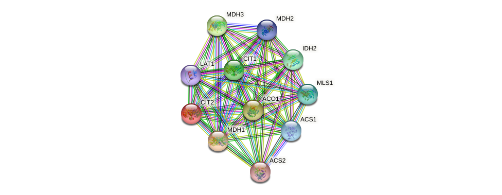 CIT2 protein (Saccharomyces cerevisiae) - STRING interaction network