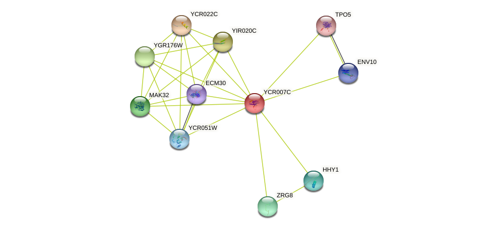 YCR007C protein (Saccharomyces cerevisiae) - STRING interaction network