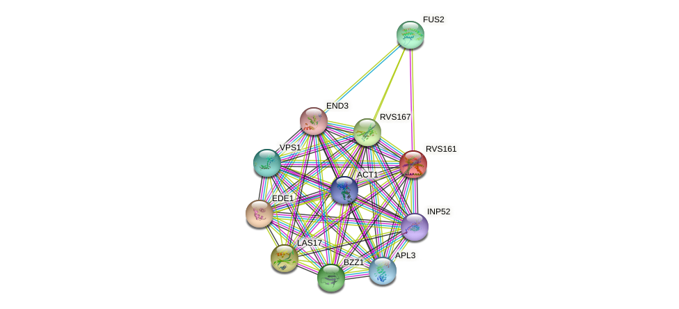 RVS161 protein (Saccharomyces cerevisiae) - STRING interaction network