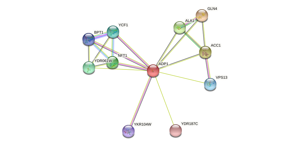 ADP1 protein (Saccharomyces cerevisiae) - STRING interaction network