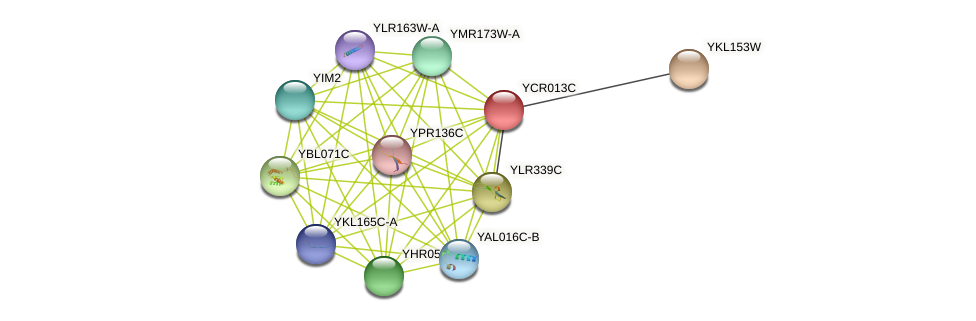 YCR013C protein (Saccharomyces cerevisiae) - STRING interaction network