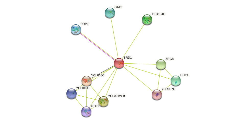 SRD1 protein (Saccharomyces cerevisiae) - STRING interaction network
