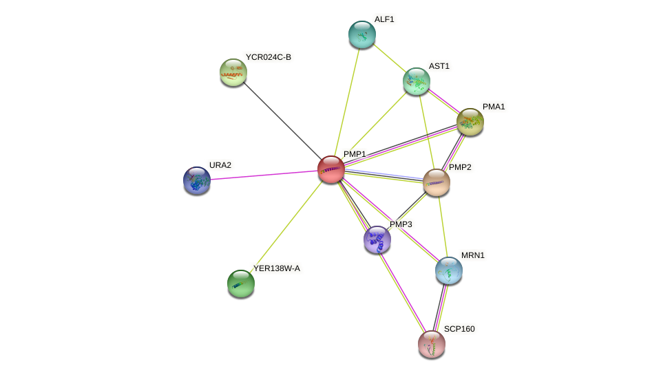 PMP1 protein (Saccharomyces cerevisiae) - STRING interaction network