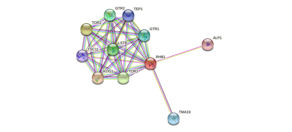 RHB1 protein (Saccharomyces cerevisiae) - STRING interaction network