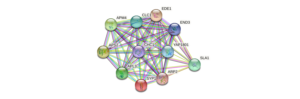 SYP1 protein (Saccharomyces cerevisiae) - STRING interaction network