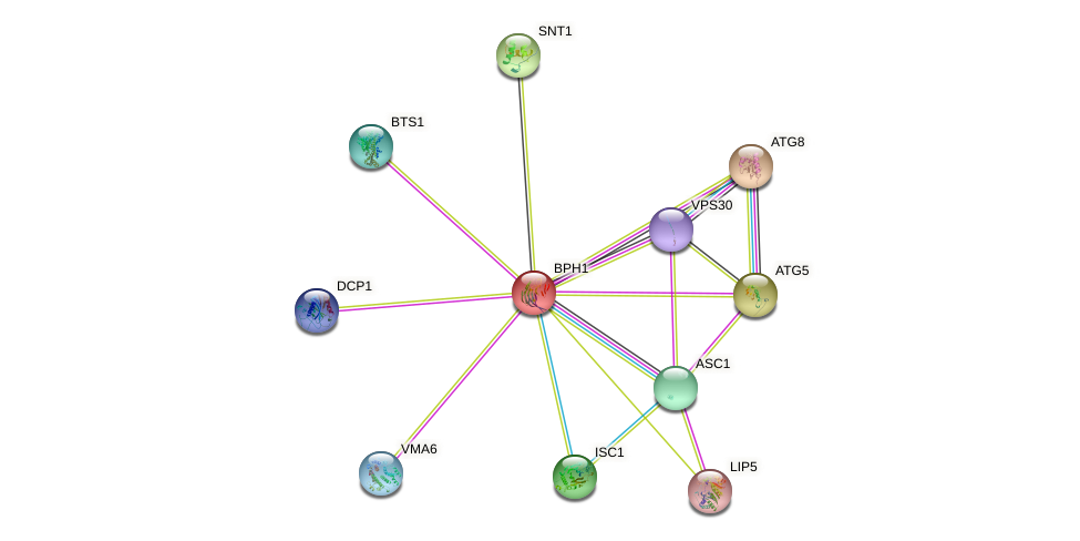 BPH1 protein (Saccharomyces cerevisiae) - STRING interaction network