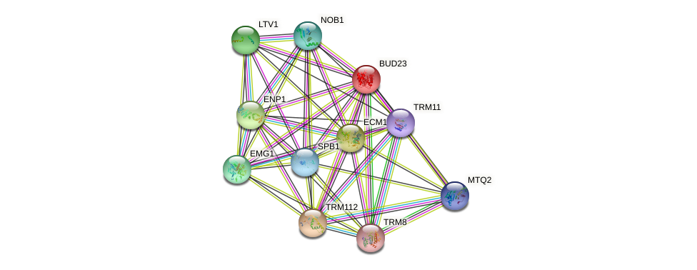 BUD23 protein (Saccharomyces cerevisiae) - STRING interaction network