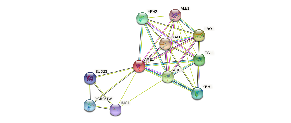 ARE1 protein (Saccharomyces cerevisiae) - STRING interaction network