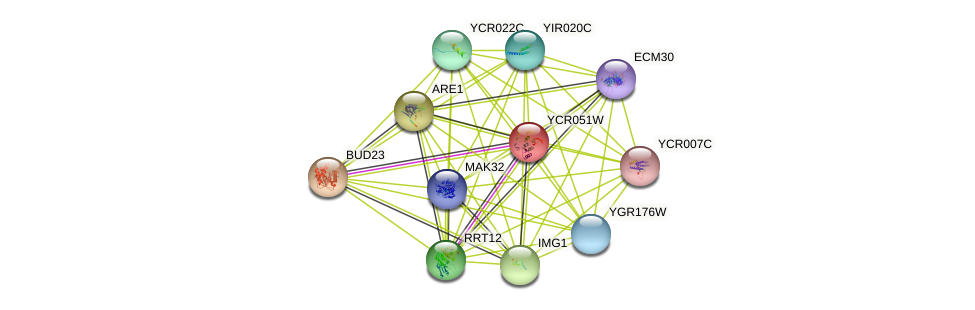 YCR051W protein (Saccharomyces cerevisiae) - STRING interaction network