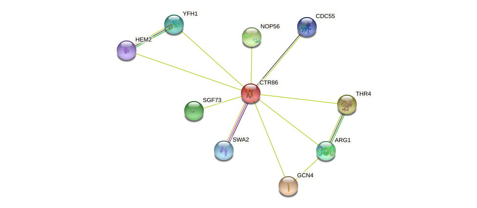 CTR86 protein (Saccharomyces cerevisiae) - STRING interaction network
