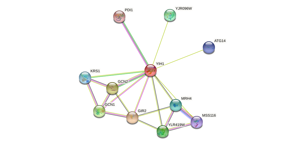 YIH1 protein (Saccharomyces cerevisiae) - STRING interaction network
