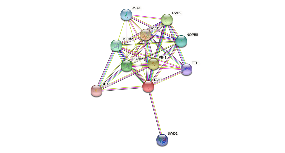 TAH1 protein (Saccharomyces cerevisiae) - STRING interaction network