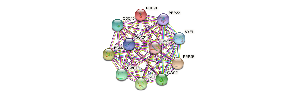 BUD31 protein (Saccharomyces cerevisiae) - STRING interaction network
