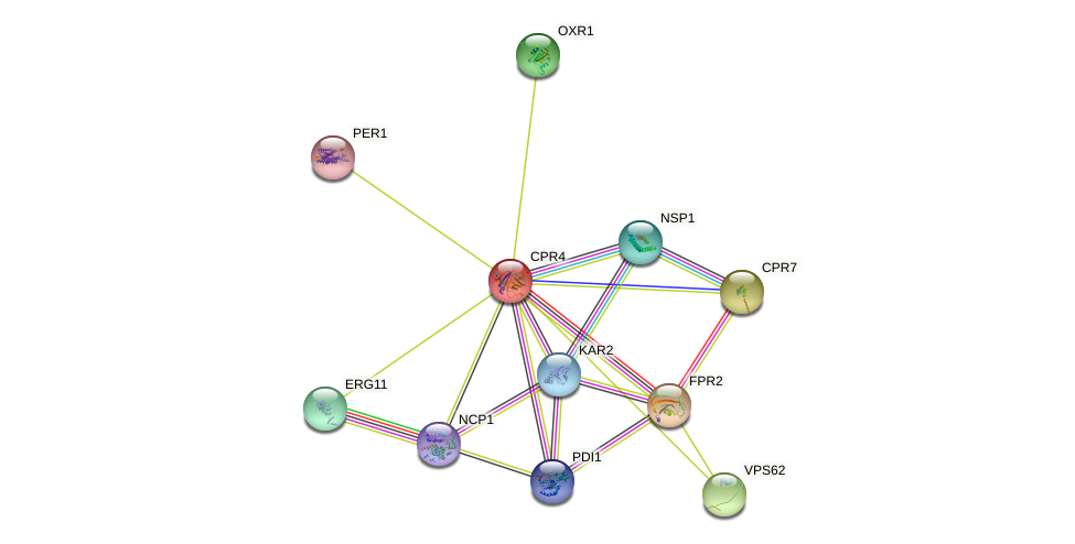 CPR4 protein (Saccharomyces cerevisiae) - STRING interaction network