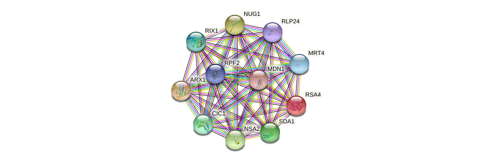 RSA4 protein (Saccharomyces cerevisiae) - STRING interaction network