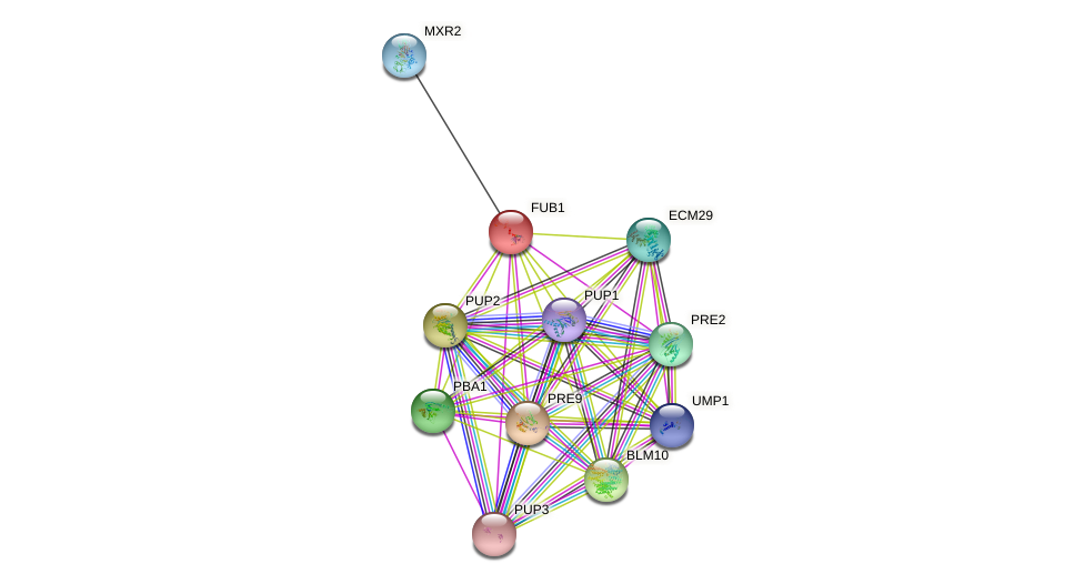FUB1 protein (Saccharomyces cerevisiae) - STRING interaction network