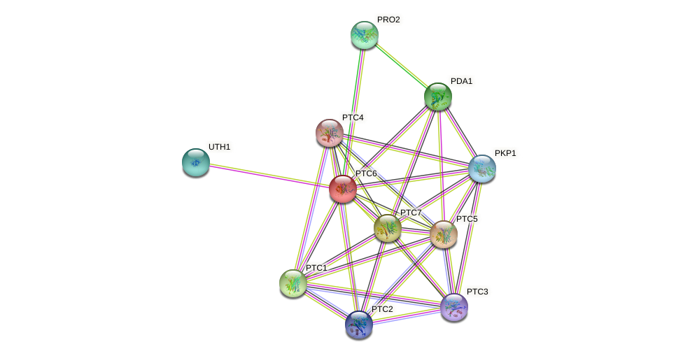 PTC6 protein (Saccharomyces cerevisiae) - STRING interaction network