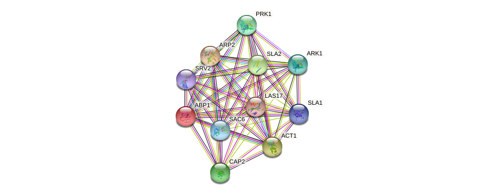 ABP1 protein (Saccharomyces cerevisiae) - STRING interaction network
