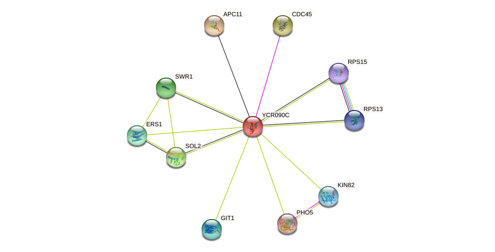 YCR090C protein (Saccharomyces cerevisiae) - STRING interaction network
