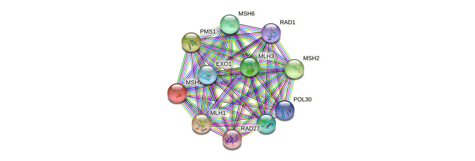 MSH3 protein (Saccharomyces cerevisiae) - STRING interaction network