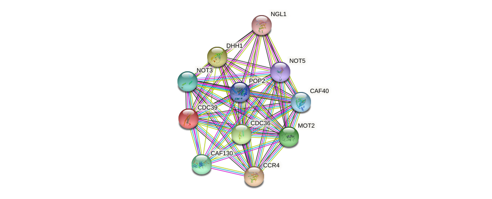 CDC39 protein (Saccharomyces cerevisiae) - STRING interaction network