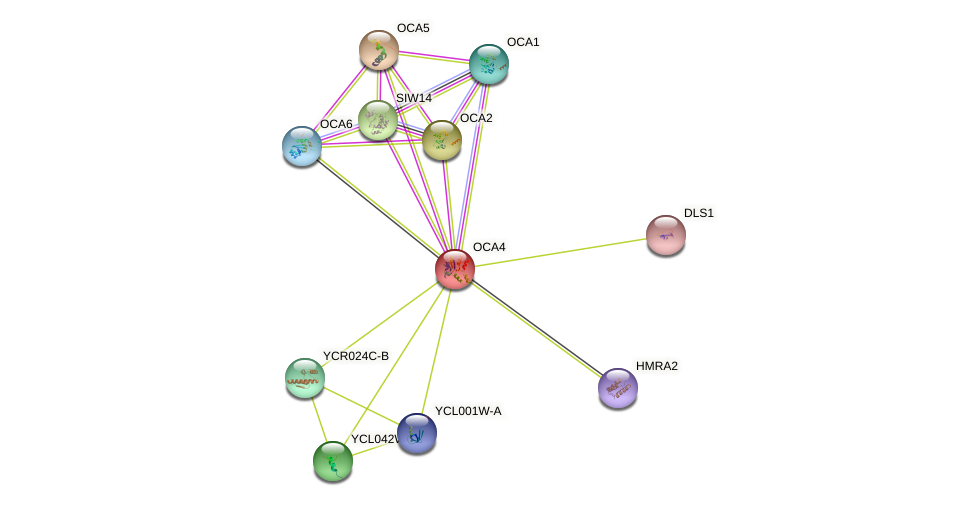 OCA4 protein (Saccharomyces cerevisiae) - STRING interaction network