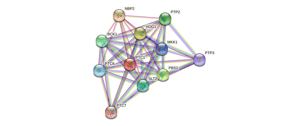PTC1 protein (Saccharomyces cerevisiae) - STRING interaction network