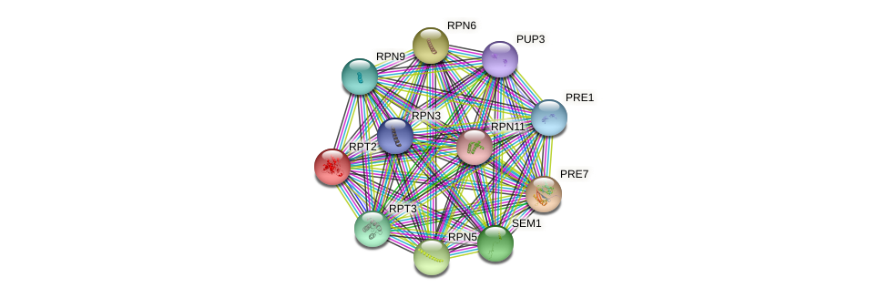 RPT2 protein (Saccharomyces cerevisiae) - STRING interaction network