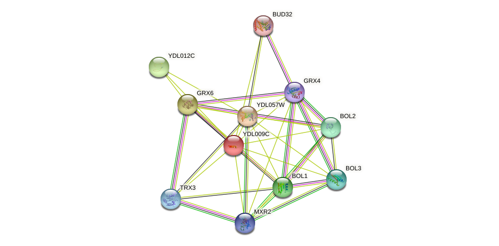 YDL009C protein (Saccharomyces cerevisiae) - STRING interaction network