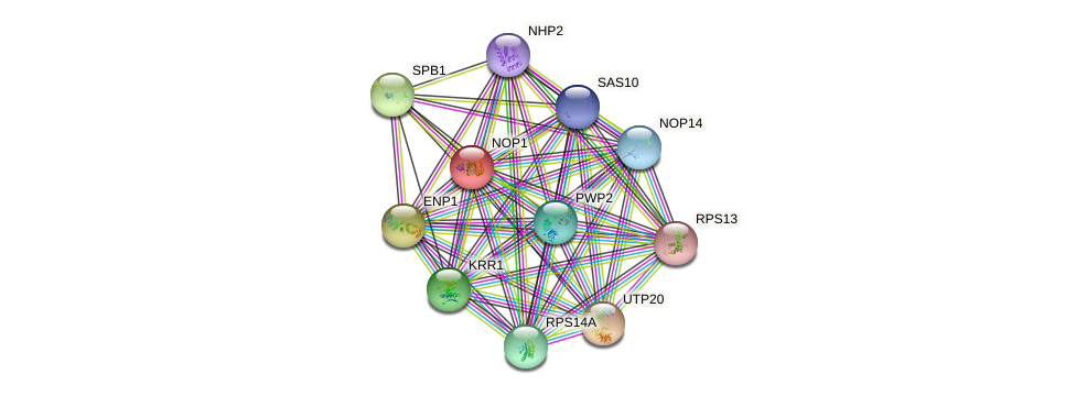 NOP1 protein (Saccharomyces cerevisiae) - STRING interaction network
