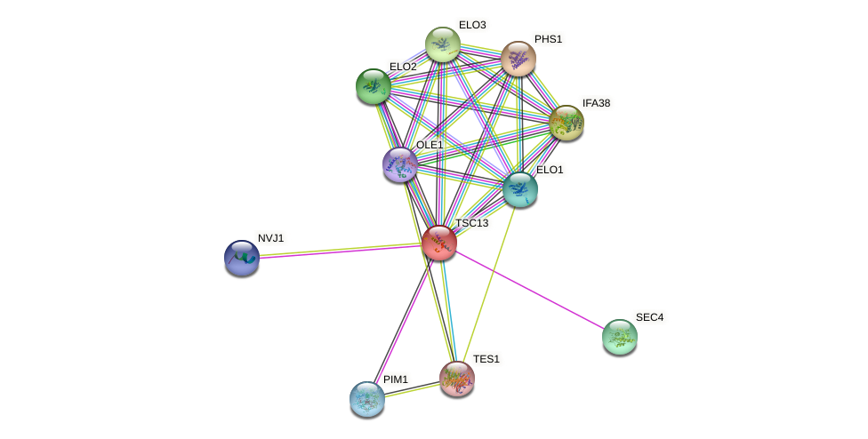 TSC13 protein (Saccharomyces cerevisiae) - STRING interaction network