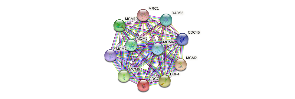 CDC7 protein (Saccharomyces cerevisiae) - STRING interaction network