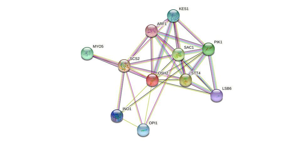 OSH2 protein (Saccharomyces cerevisiae) - STRING interaction network
