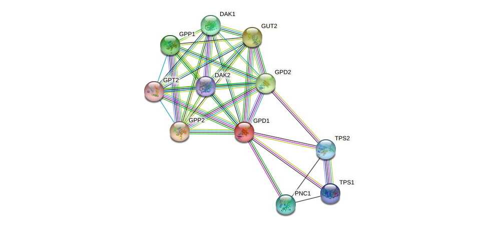 GPD1 protein (Saccharomyces cerevisiae) - STRING interaction network