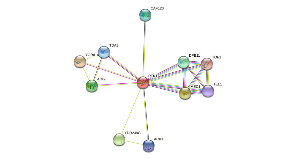 RTK1 protein (Saccharomyces cerevisiae) - STRING interaction network