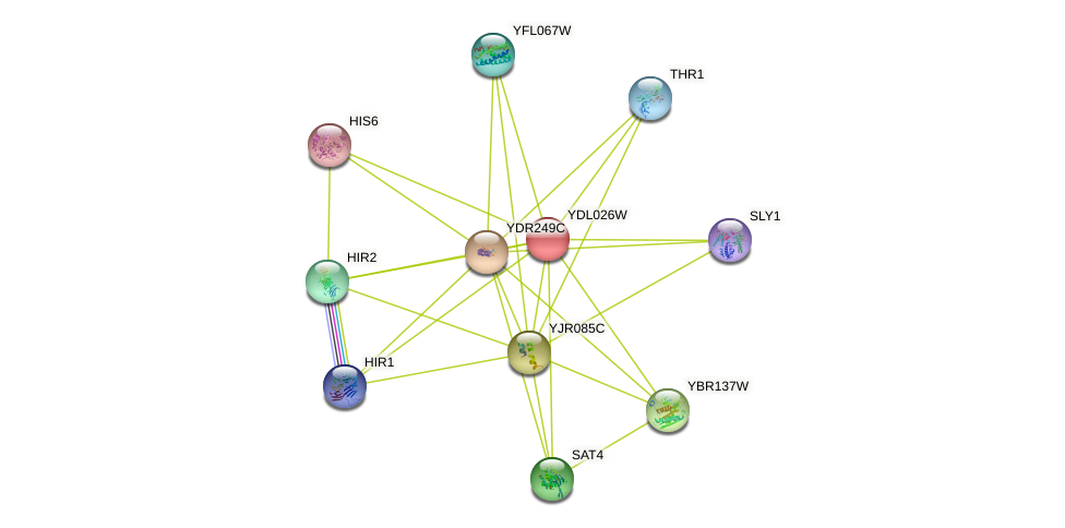 YDL026W protein (Saccharomyces cerevisiae) - STRING interaction network