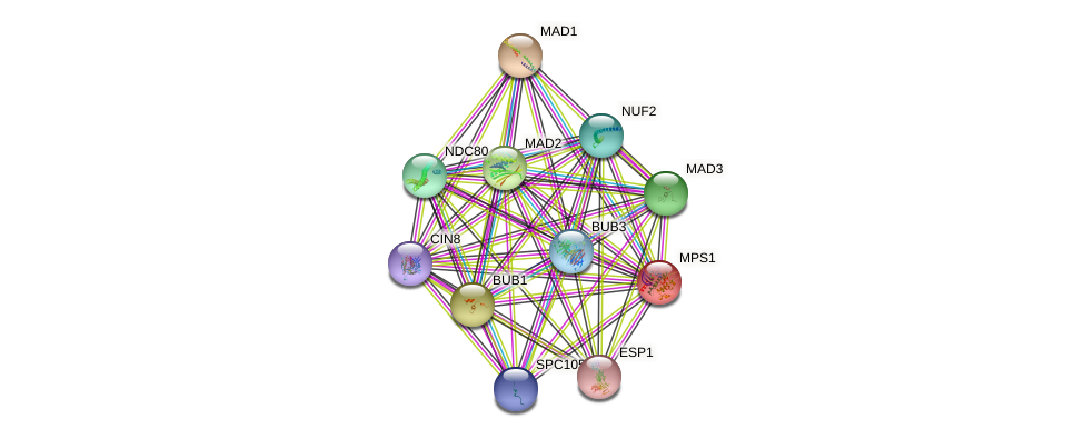 MPS1 protein (Saccharomyces cerevisiae) - STRING interaction network