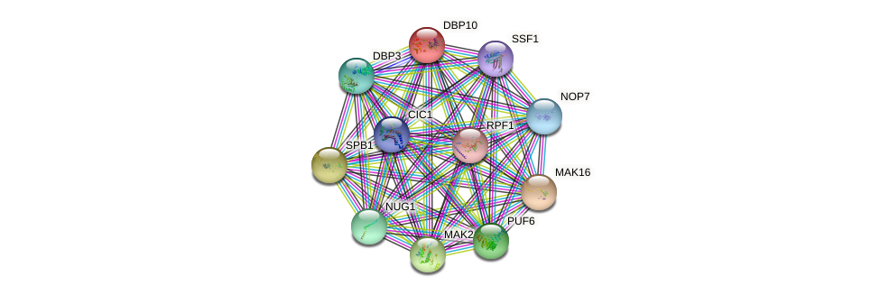 DBP10 protein (Saccharomyces cerevisiae) - STRING interaction network