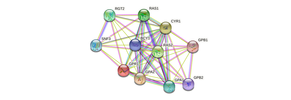 GPR1 protein (Saccharomyces cerevisiae) - STRING interaction network