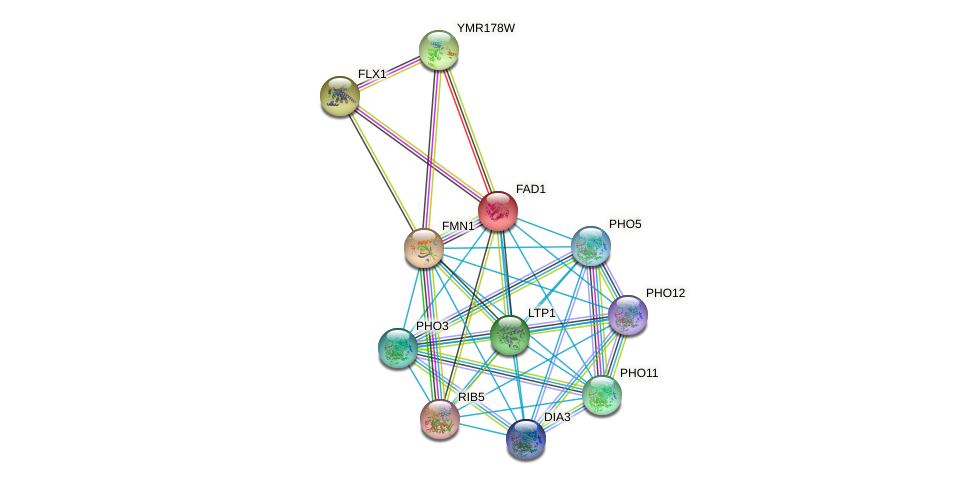 FAD1 protein (Saccharomyces cerevisiae) - STRING interaction network