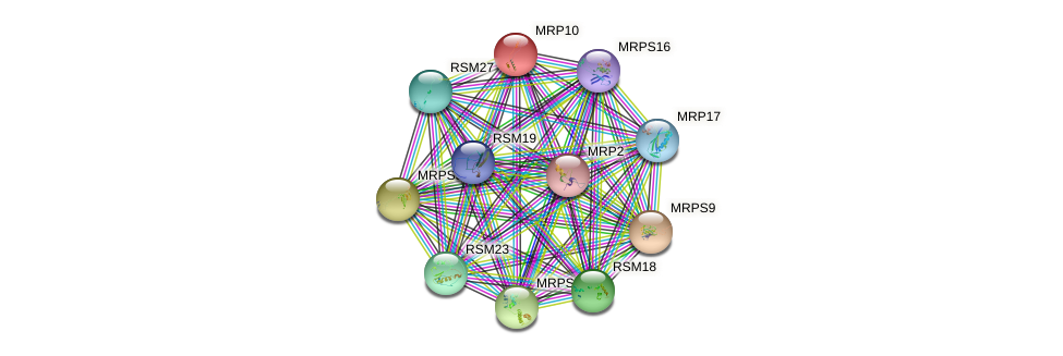 MRP10 protein (Saccharomyces cerevisiae) - STRING interaction network
