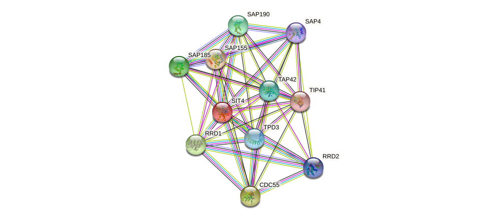 SIT4 protein (Saccharomyces cerevisiae) - STRING interaction network