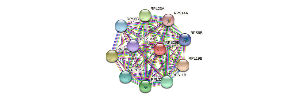RPS29B protein (Saccharomyces cerevisiae) - STRING interaction network