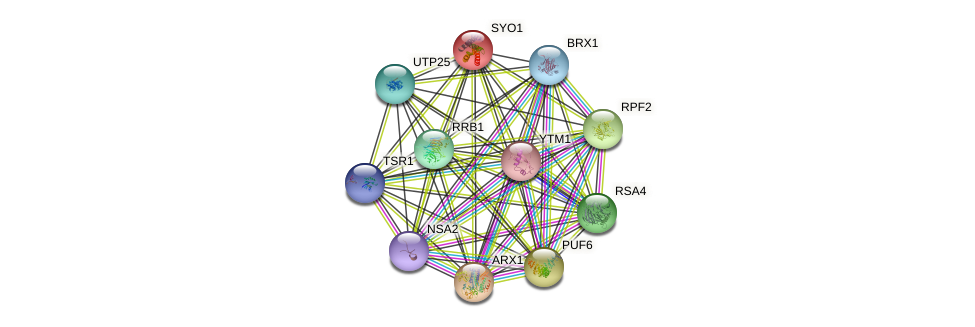 SYO1 protein (Saccharomyces cerevisiae) - STRING interaction network