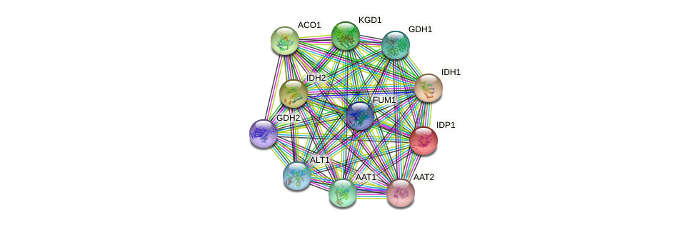IDP1 protein (Saccharomyces cerevisiae) - STRING interaction network