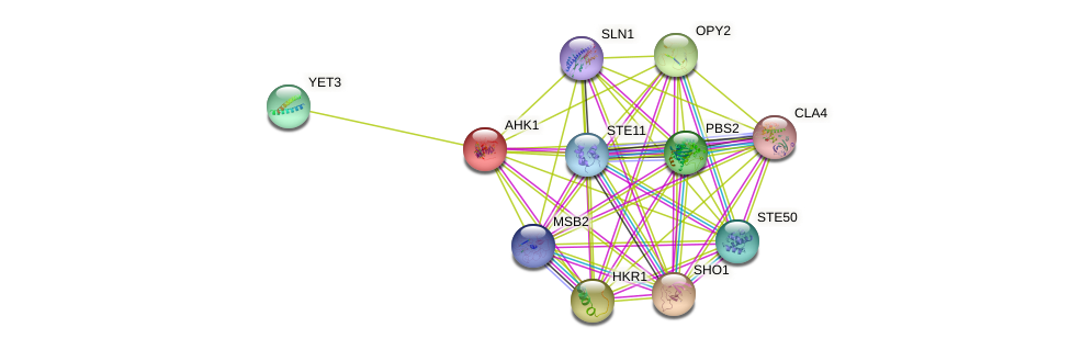 AHK1 protein (Saccharomyces cerevisiae) - STRING interaction network