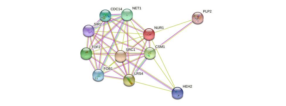 NUR1 protein (Saccharomyces cerevisiae) - STRING interaction network